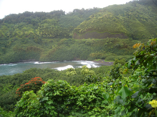 IMAGE(http://squarehe.com/images/0508/rainforest.jpg)
